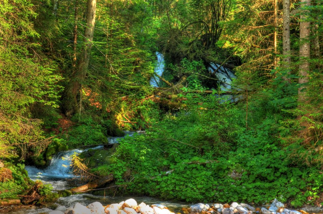 Germany Forests Bavaria Stream Nature wallpaper