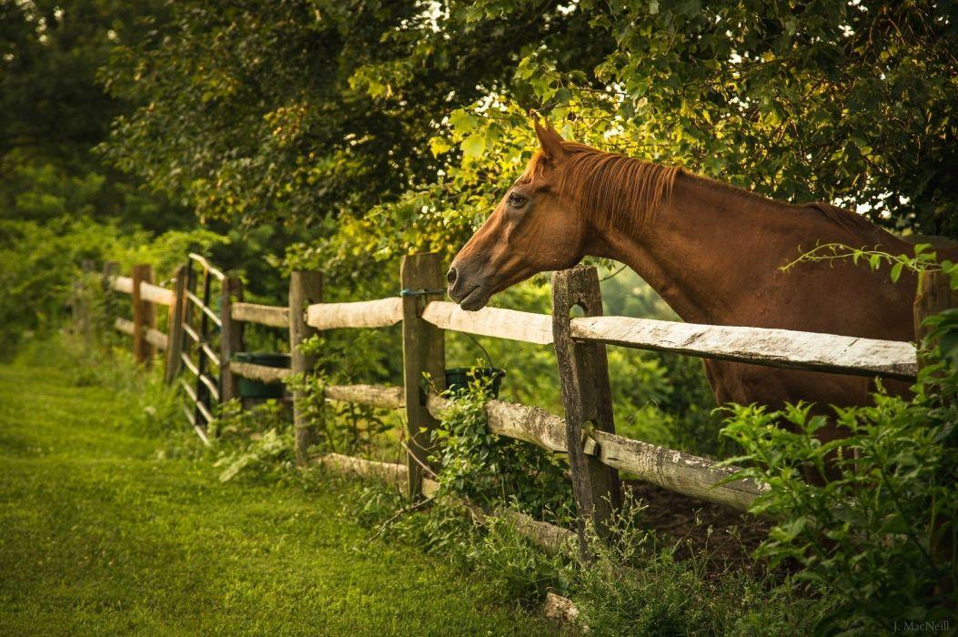 horse face profile fence wallpaper