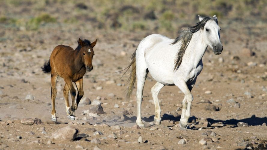 horse mare foal mother baby couple family running wallpaper