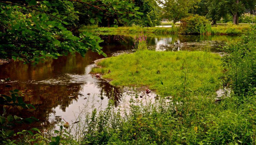 Parks Pond Grass Nature wallpaper