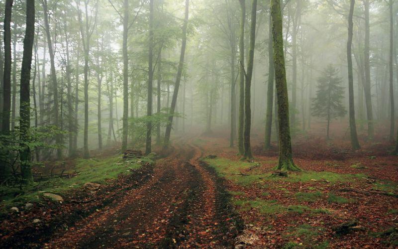 road forest mist landscape fog wallpaper