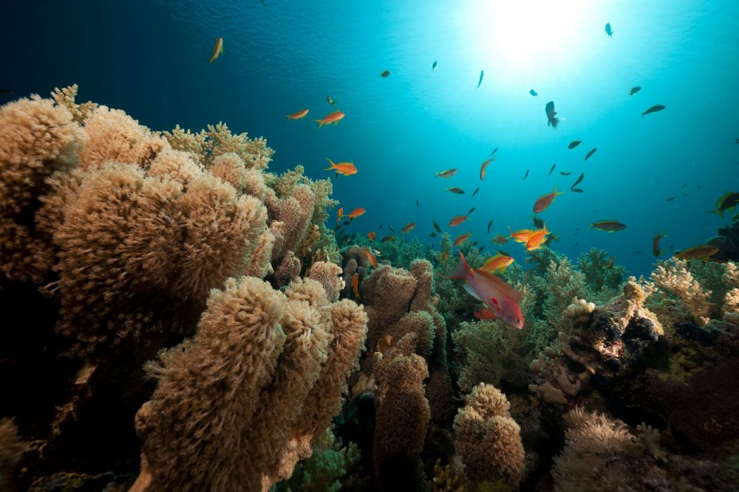 Sea Corals Fish Underwater world Nature wallpaper