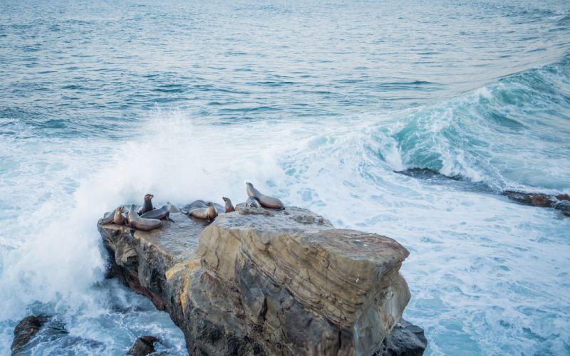 SealOcean wallpaper