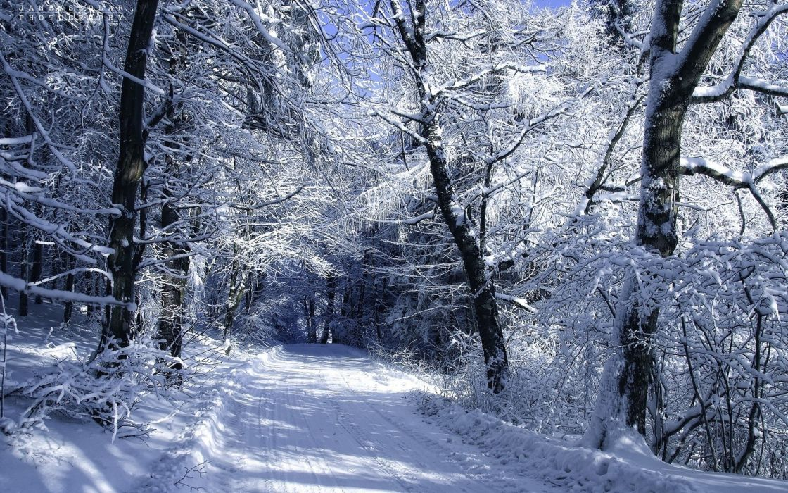 snow winter road forest wallpaper