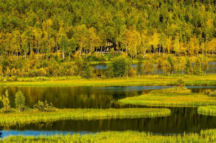 trees forest norway house lake autumn wallpaper