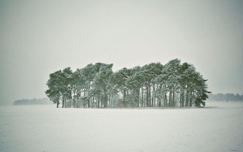 blizzard snow winter forest trees wallpaper