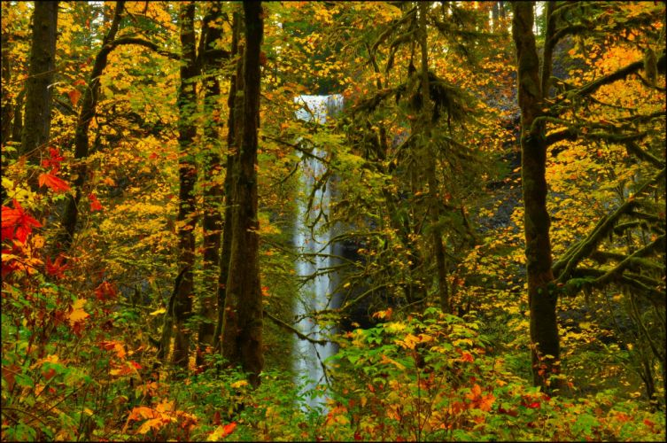 trees forest leaves waterfall autumn wallpaper