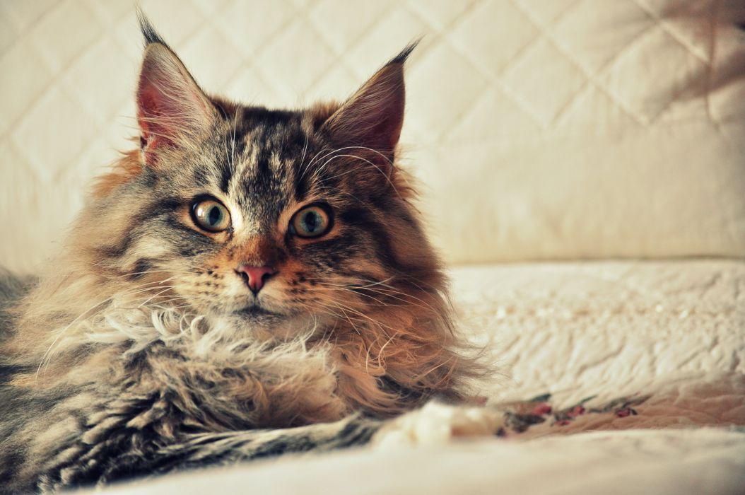 view blanket cat wallpaper