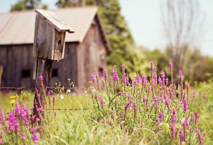 birdhouse house cabin trees grass flowers field summer nature wallpaper