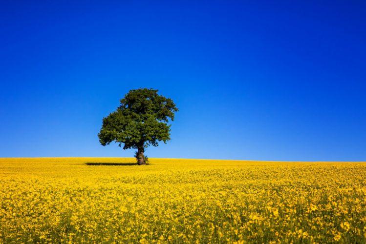 field tree sky blue wallpaper