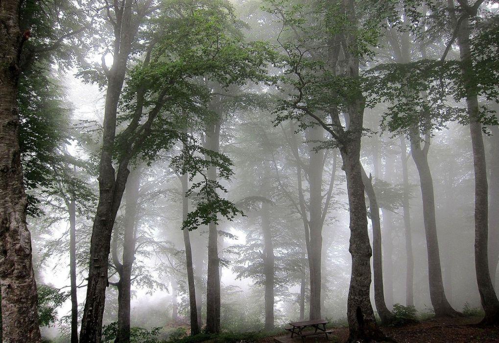 forest fog trees wallpaper