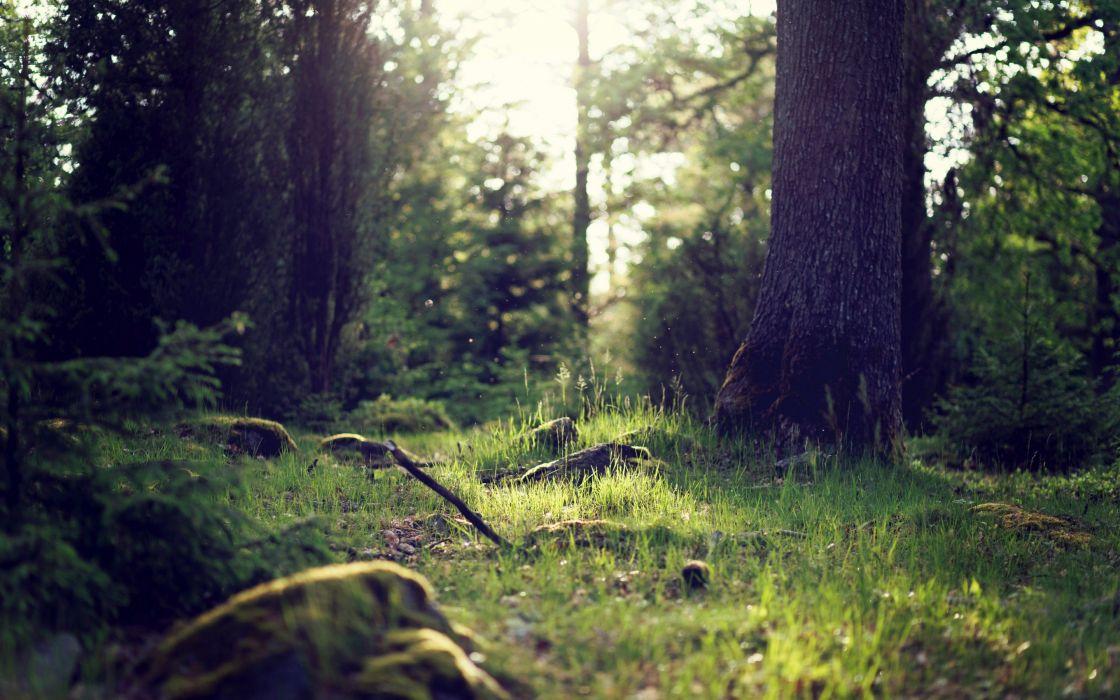 Forest trees trunks bushes grass green light nature wallpaper