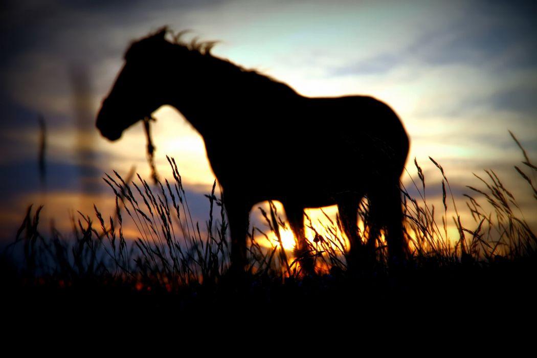 horse silhouette sunset sun blur wallpaper