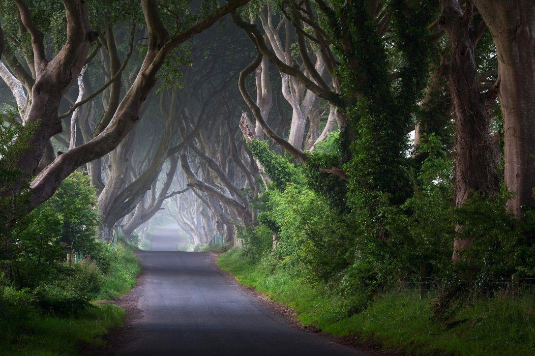 Ireland road trees trunks mist morning nature wallpaper