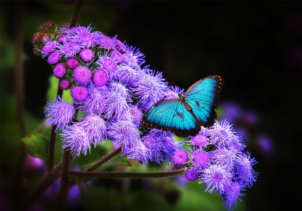 Insects Butterflies butterfly wallpaper