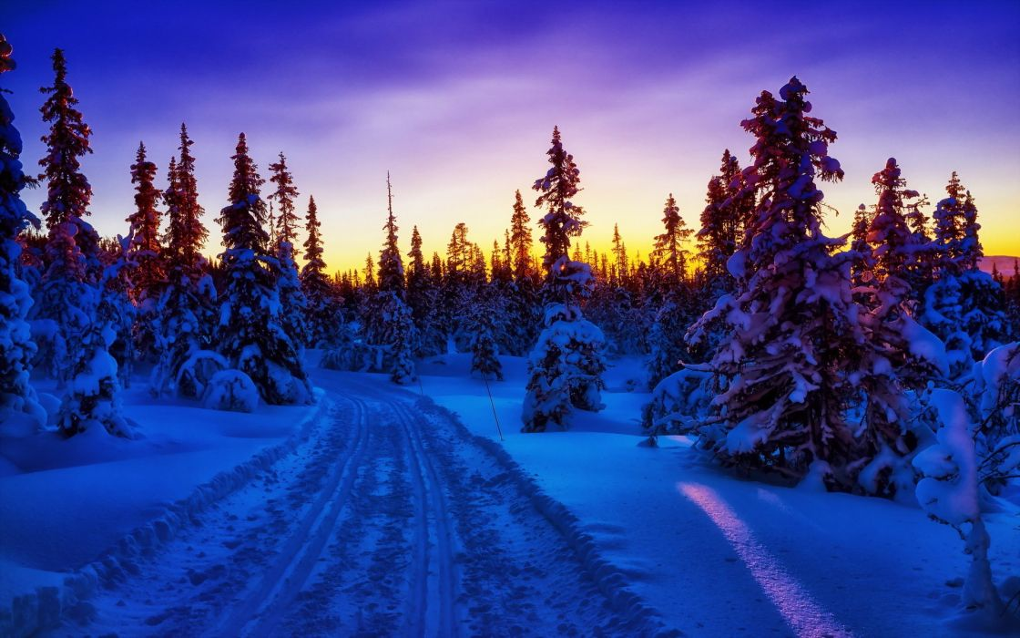 sunset winter trees road wallpaper