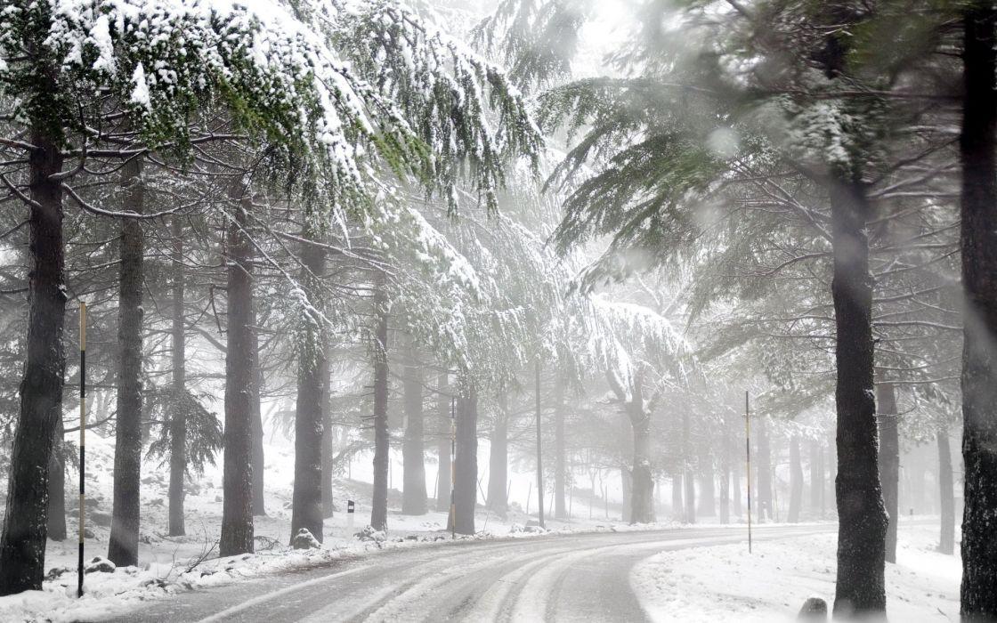 winter road forest mist wallpaper