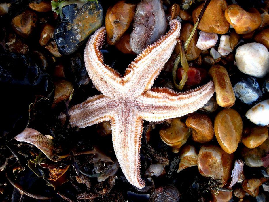 starfish ocean sea sealife fish bokeh wallpaper