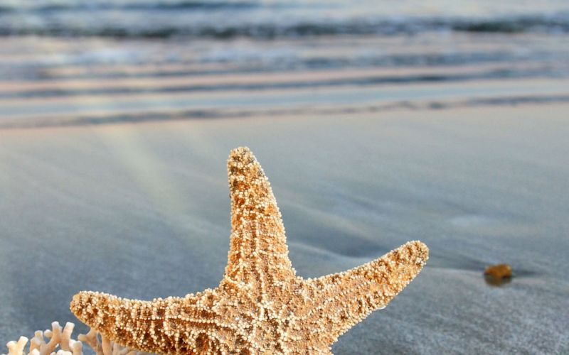starfish ocean sea sealife fish bokeh wallpaper