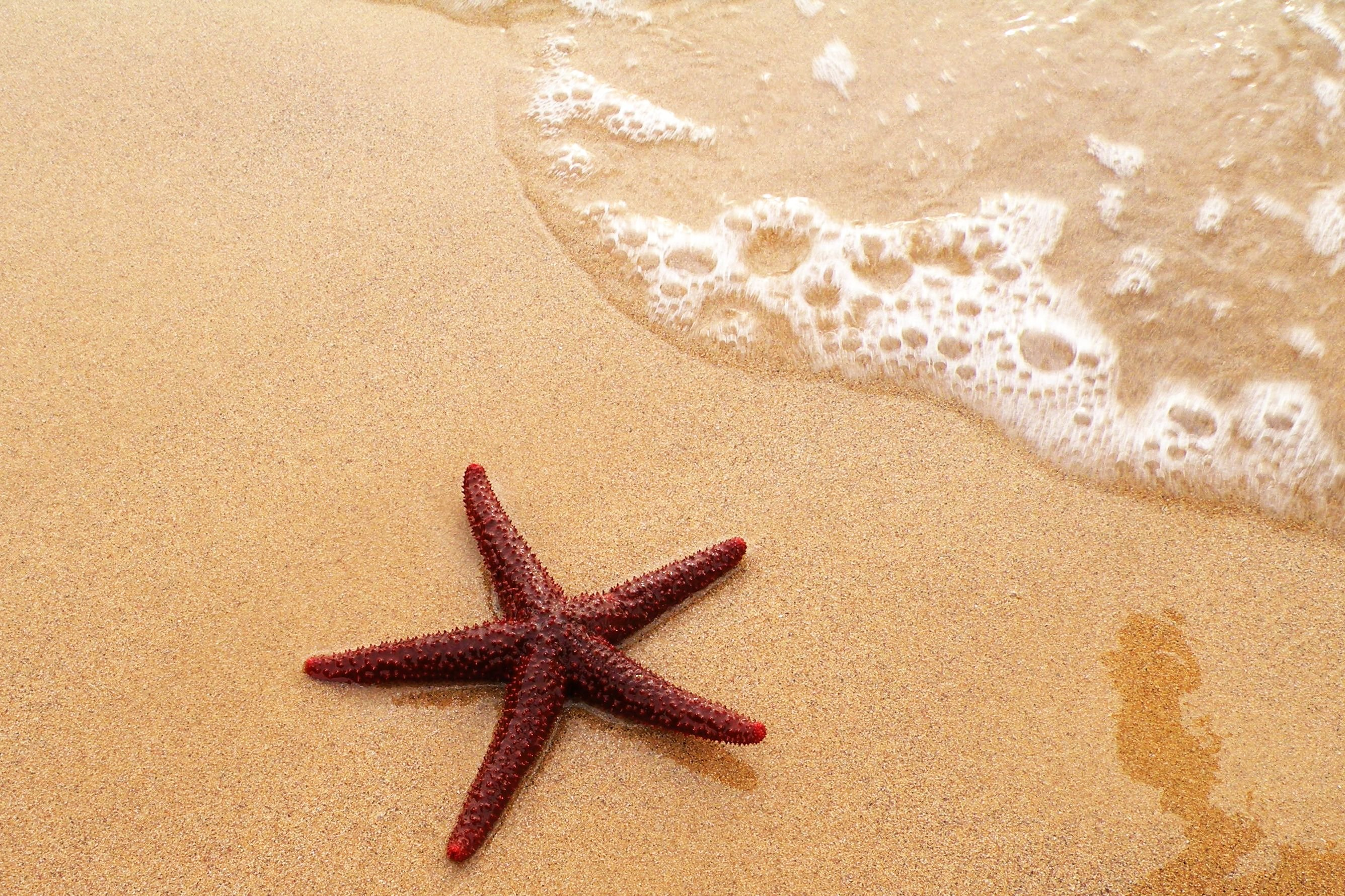 Image Gallery ocean starfish