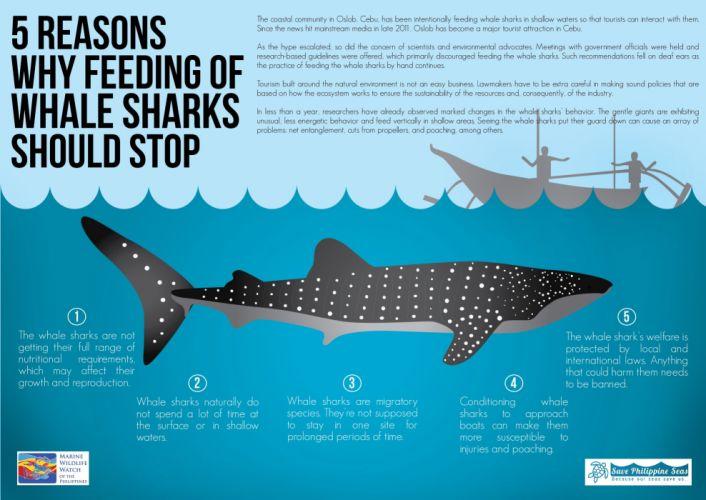 whale shark underwater ocean sea wallpaper