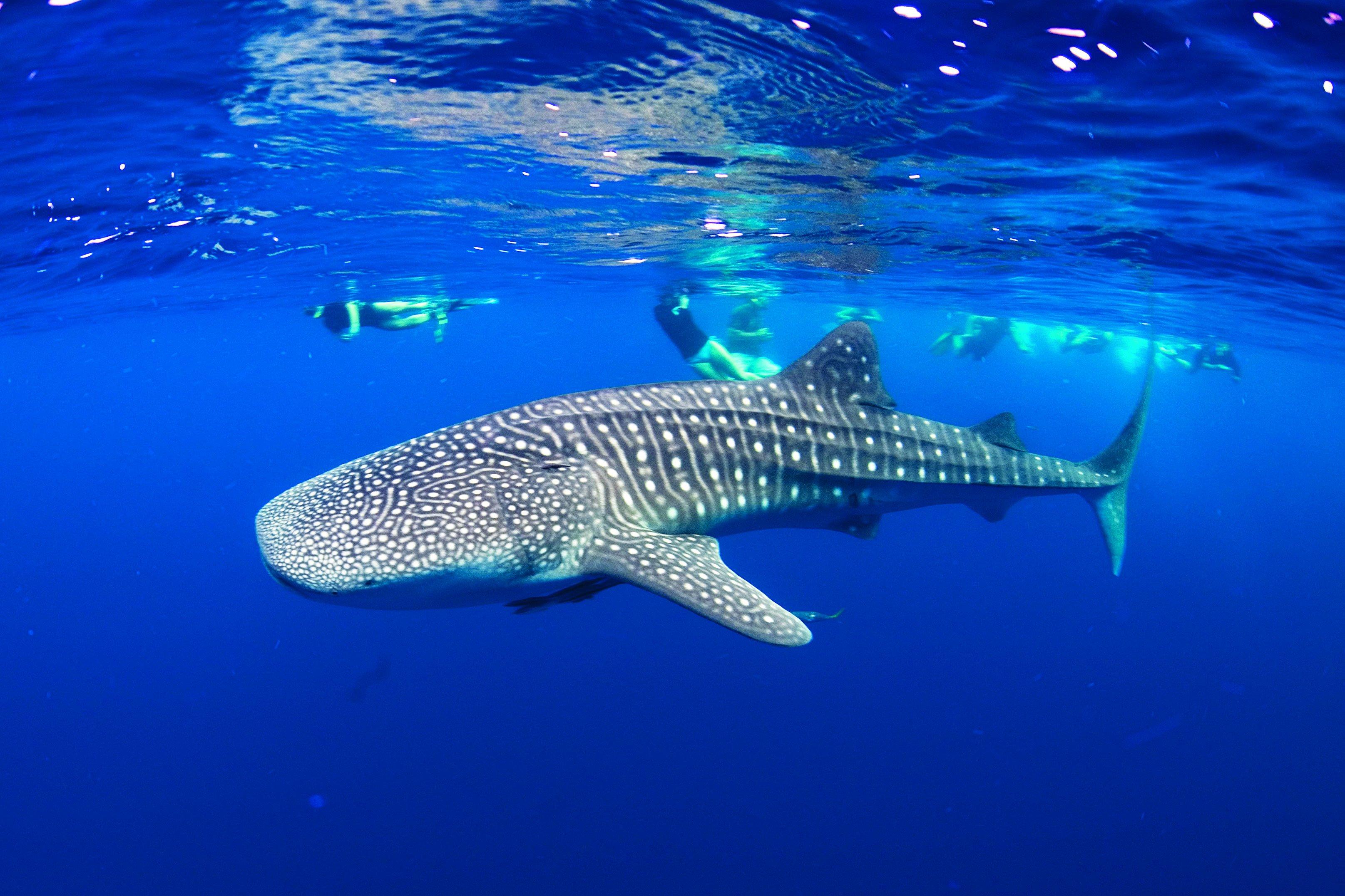 2560x1600 ocean sharks - photo #37