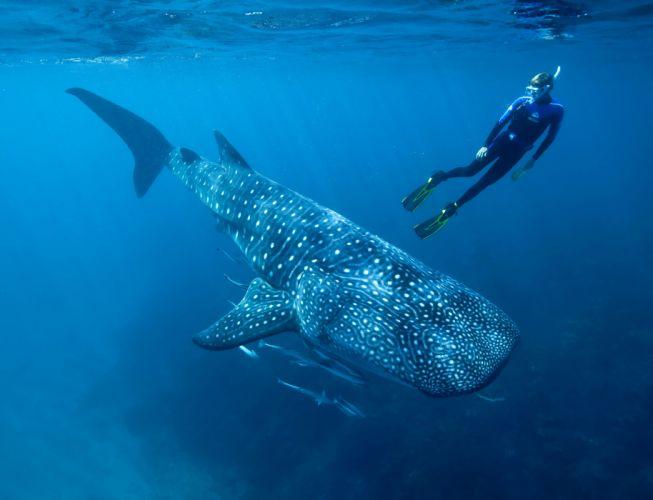 2560x1600 ocean sharks - photo #26