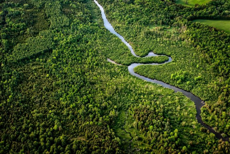 forest river greens panorama wallpaper