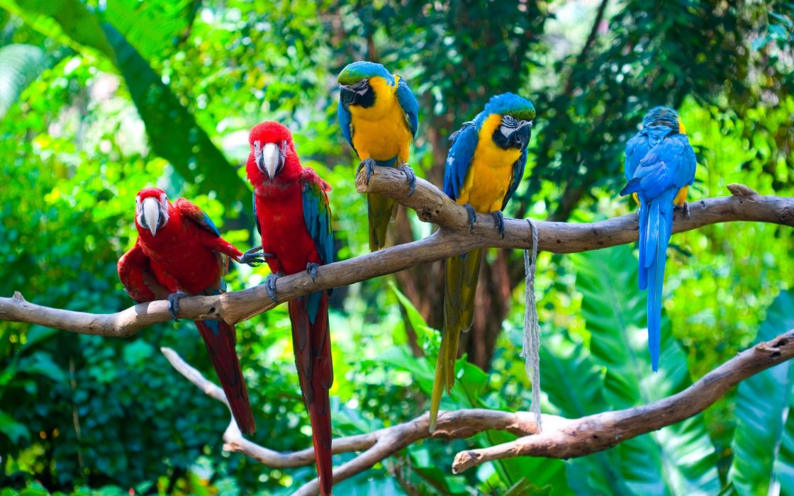 green parrot branches macaw wallpaper