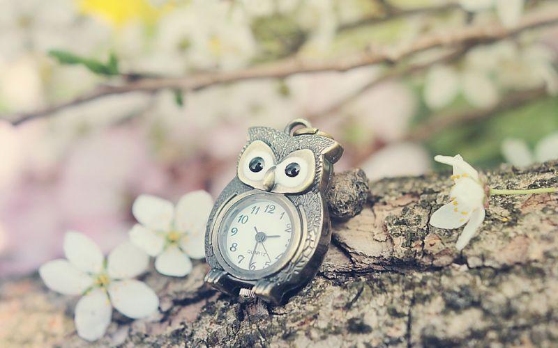 Time bokeh watch owl wallpaper