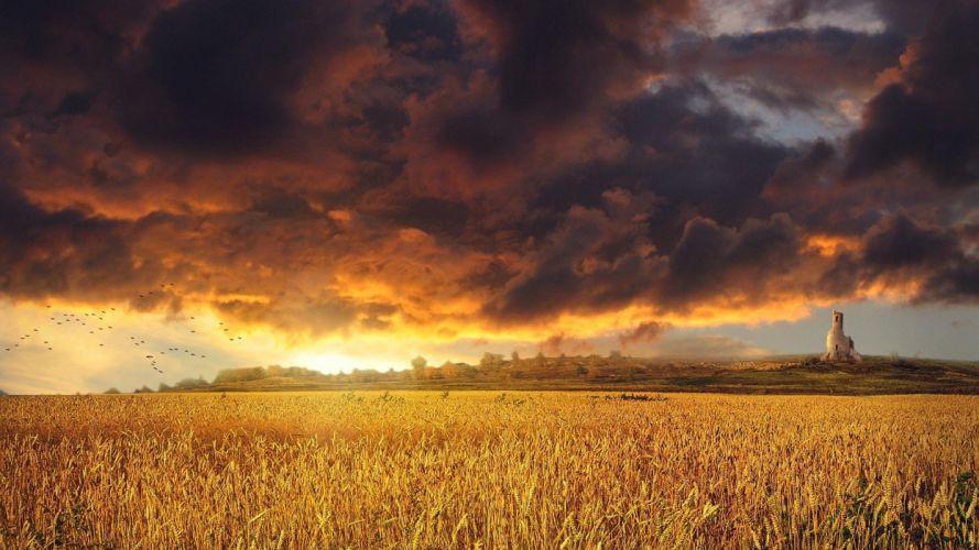 golden sunset over a field wheat grass clouds sky wallpaper