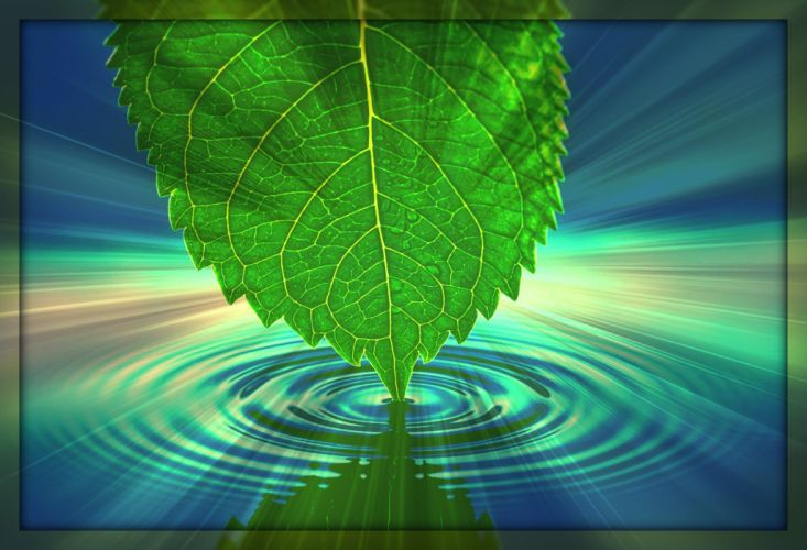 leaf leaves water ripple focal wallpaper