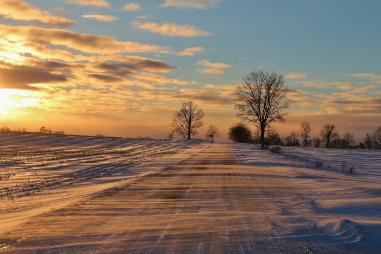 blizzards snow winter trees road wallpaper