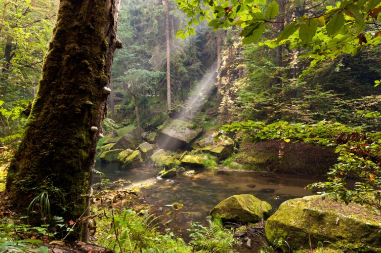 Forest Water Trunk tree Nature wallpaper