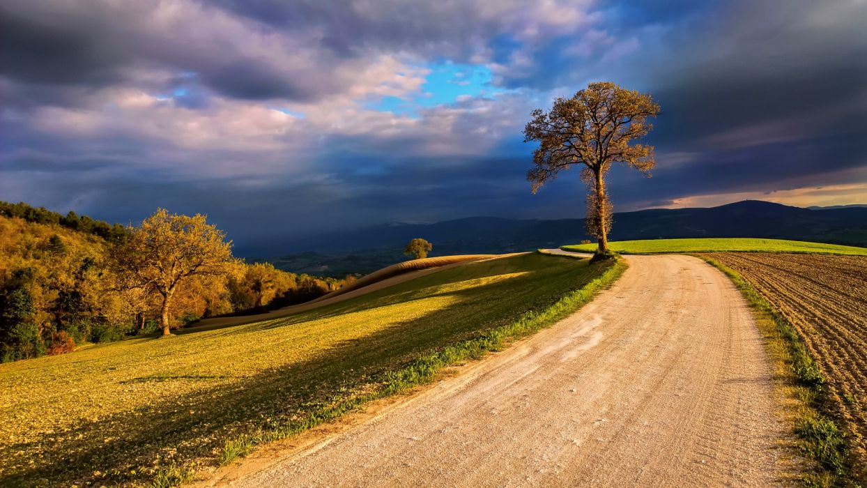 Italy nature field tree light clouds clouds sky wallpaper