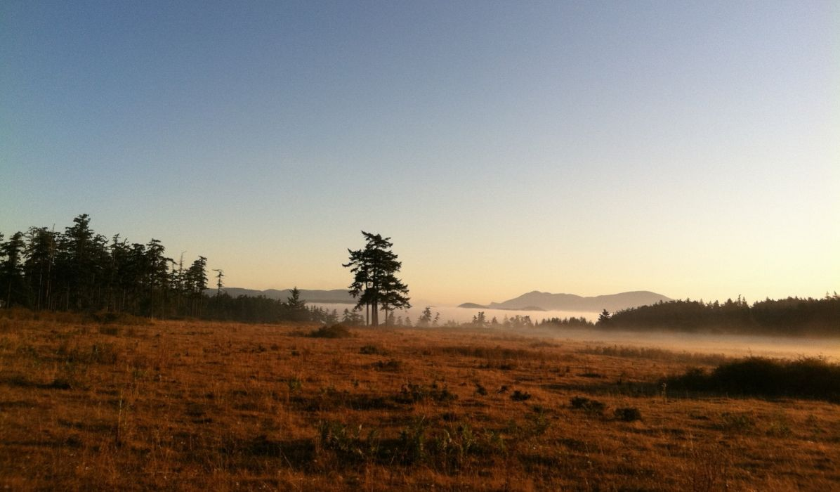 mountains fog lake nature mist with meadow and tree morning wallpaper