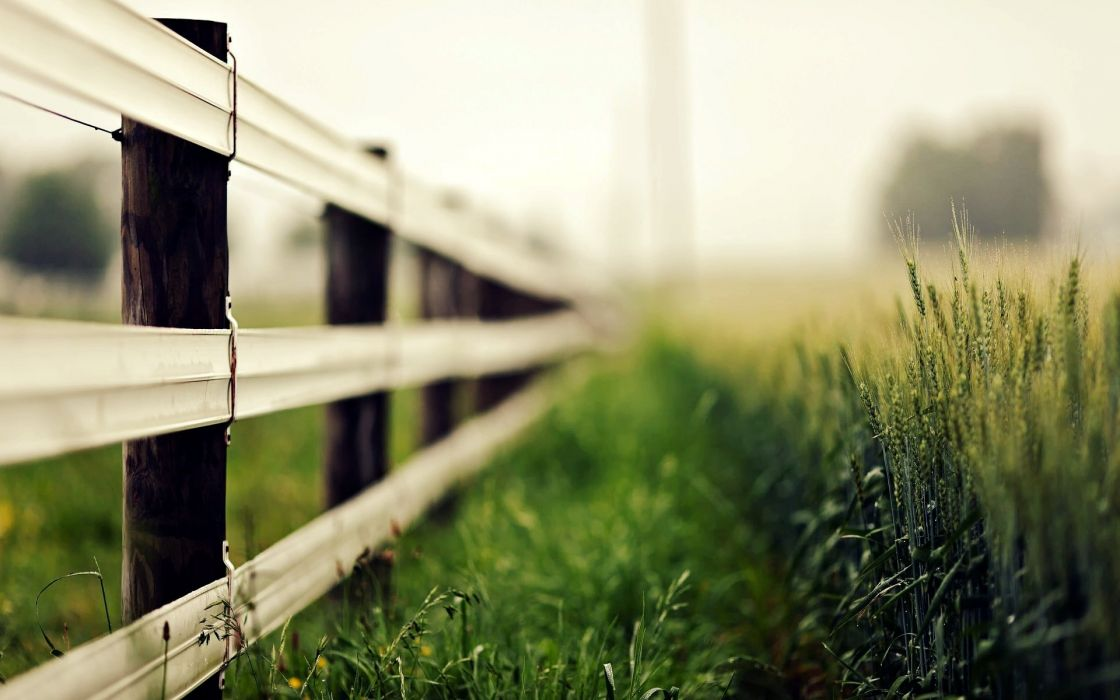 nature macro fence fence fence grass ears ears blur rye wheat wallpaper
