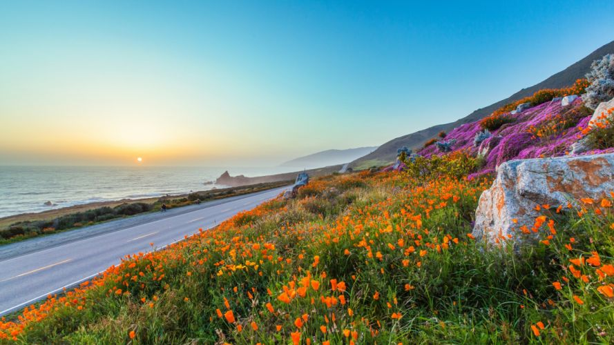 road flowers sky poppies evening sunset wallpaper