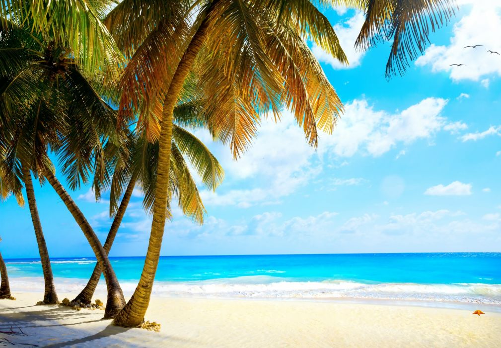 summer palms vacation tropical sea paradise beach ocean wallpaper