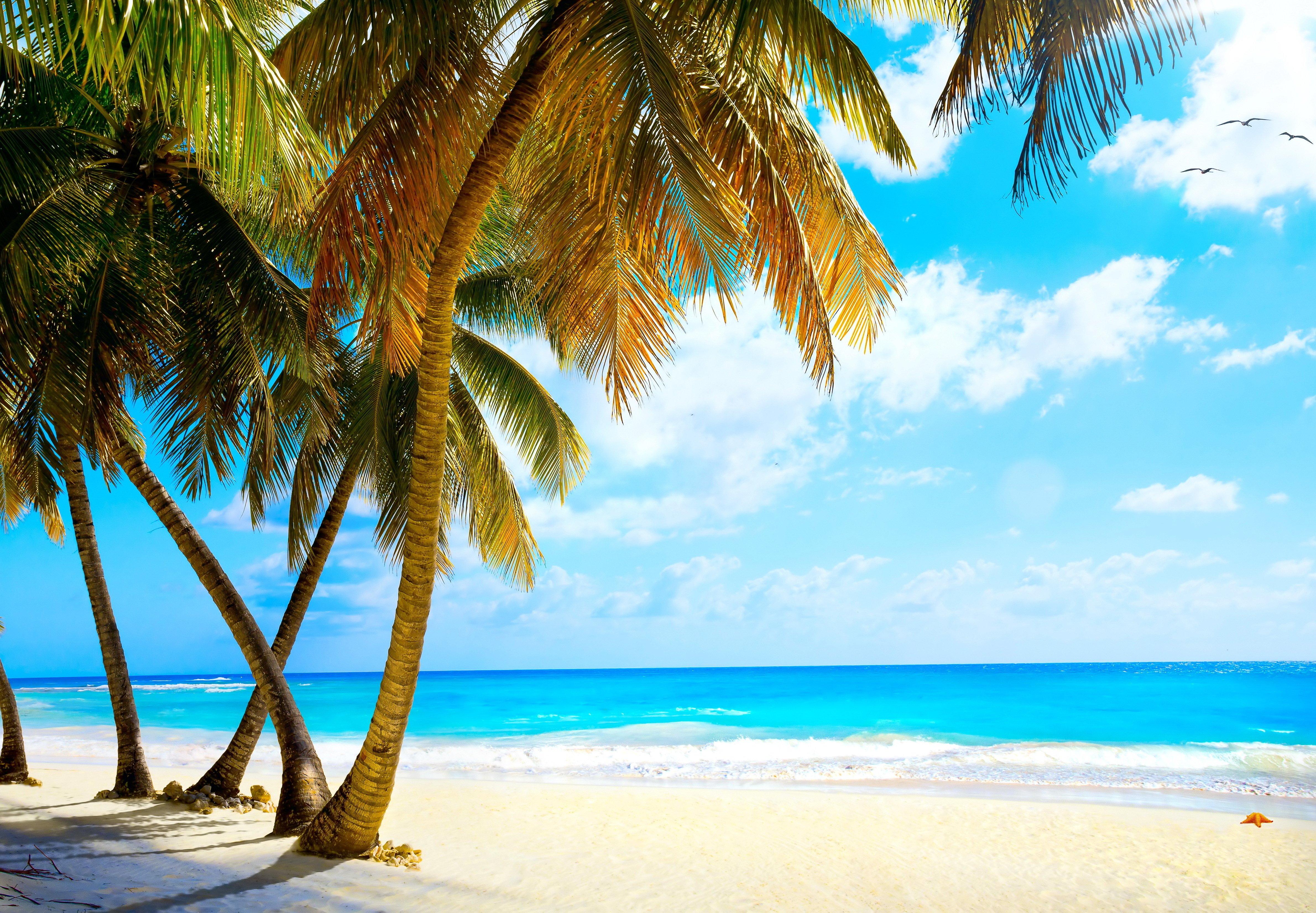 ocean landscapes beach paradise - photo #42