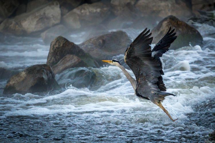 beach rocks waves foam spray bird heron takeoff wallpaper