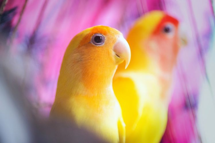 Birds Parrot Beak Animals wallpaper