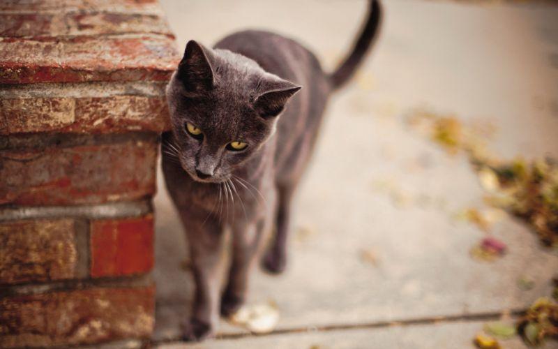 cat street background wallpaper