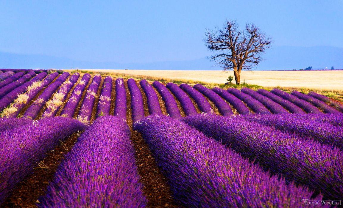 flowers lavender field plantation tree france wallpaper. Black Bedroom Furniture Sets. Home Design Ideas