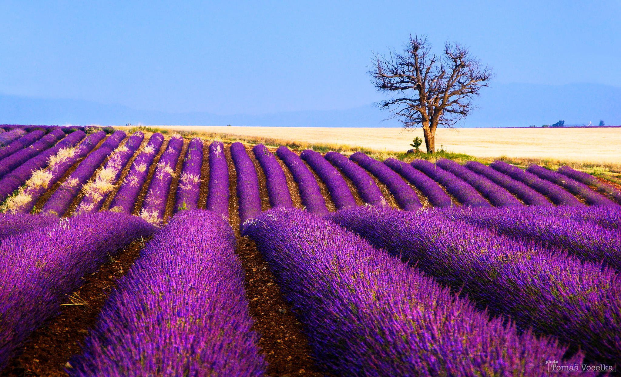 lavender wallpaper for iphone