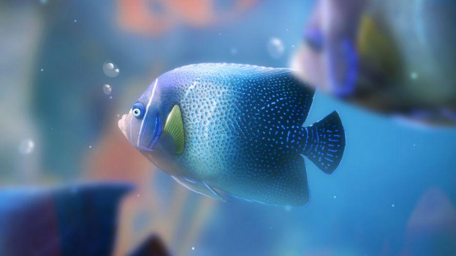 fish aquarium bubbles wallpaper