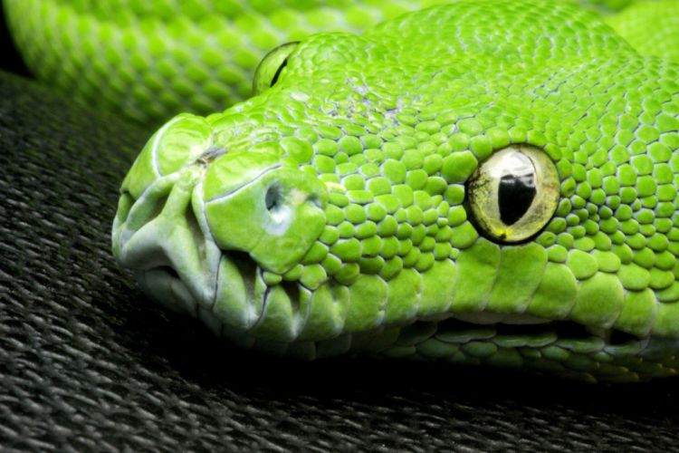 GREEN snake head eye look SCALES wallpaper