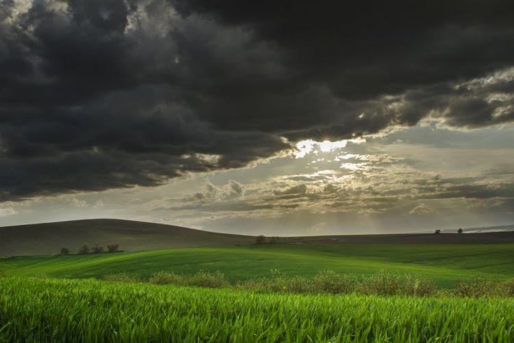 hills field wheat wallpaper