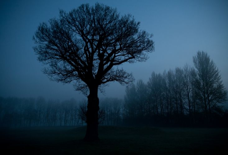 nature night sky trees silhouette wallpaper