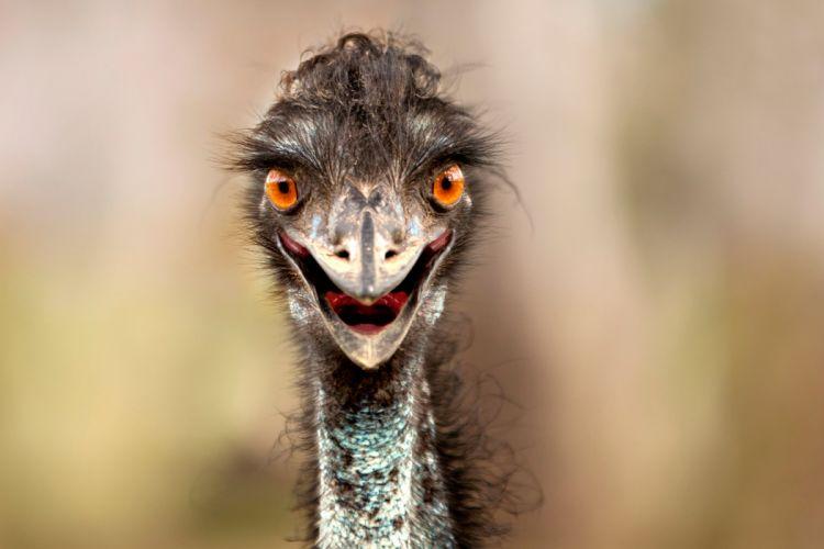 ostrich beak eyes wallpaper